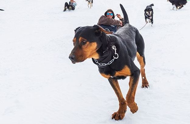 Picture of Dog Derby Country Entry