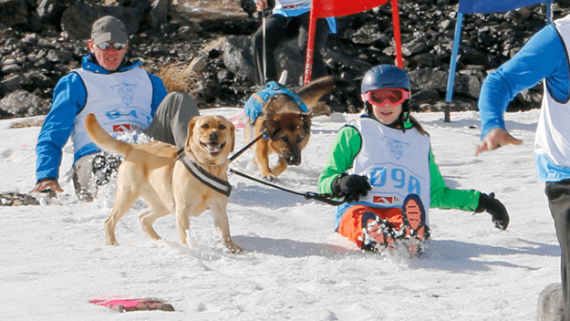 Picture of Dog Derby Kids Entry